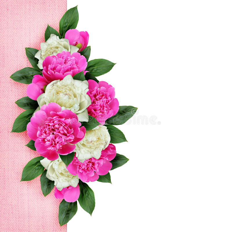 Background with ink and white peonies flowers stock photo image of download background with ink and white peonies flowers stock photo image of isolated background mightylinksfo