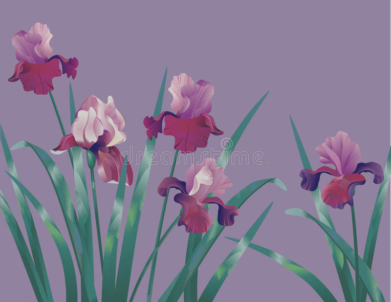 Background with iris stock illustration