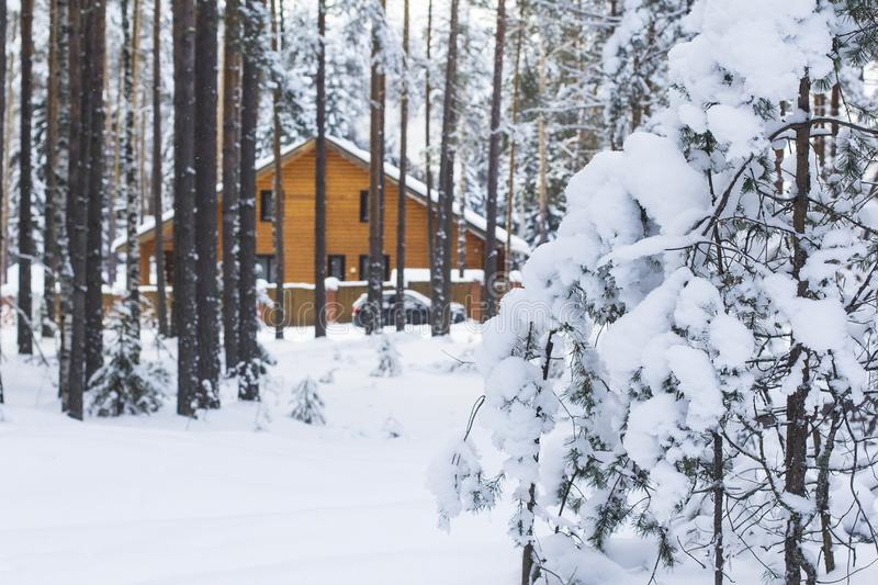 Background landscape, beautiful big wooden house in the midst of a snow-covered pine forest stock photo