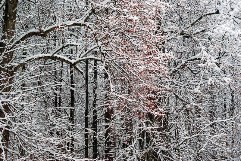 Winter forest after snowfall stock image