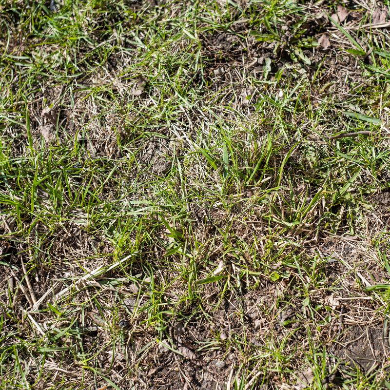 Garden Lawn With Bare Spots Stock Image Image Of Dead