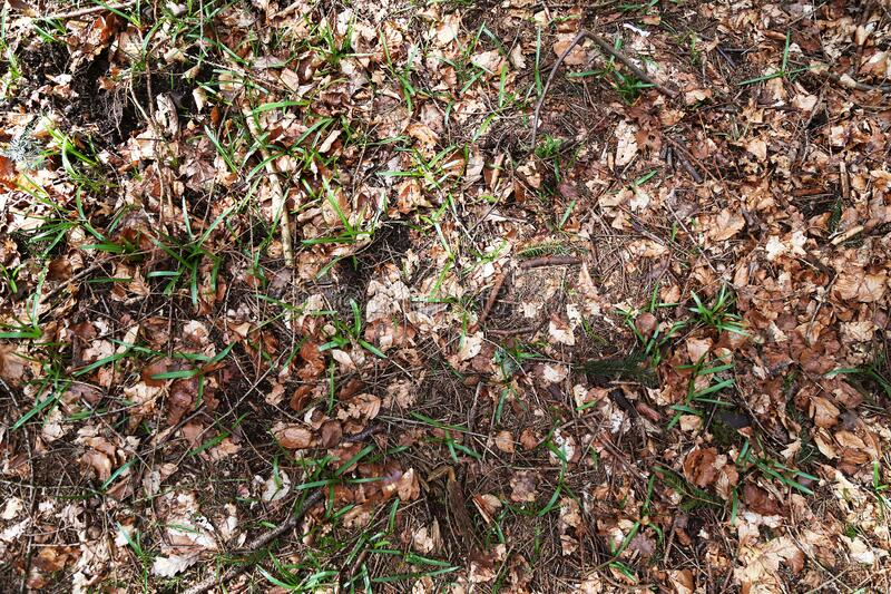 Forest Floor Background royalty free stock images