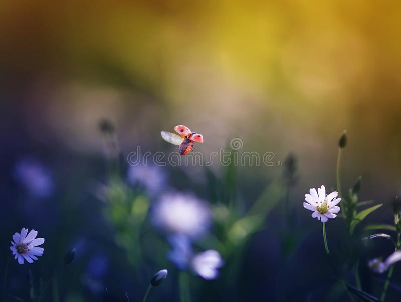 background with a little ladybug flying over a green mea stock images