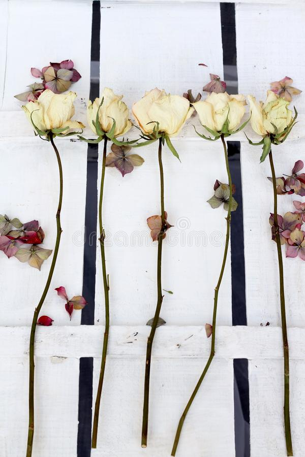 A background of long stemmed dried roses and hydrangea petals royalty free stock image