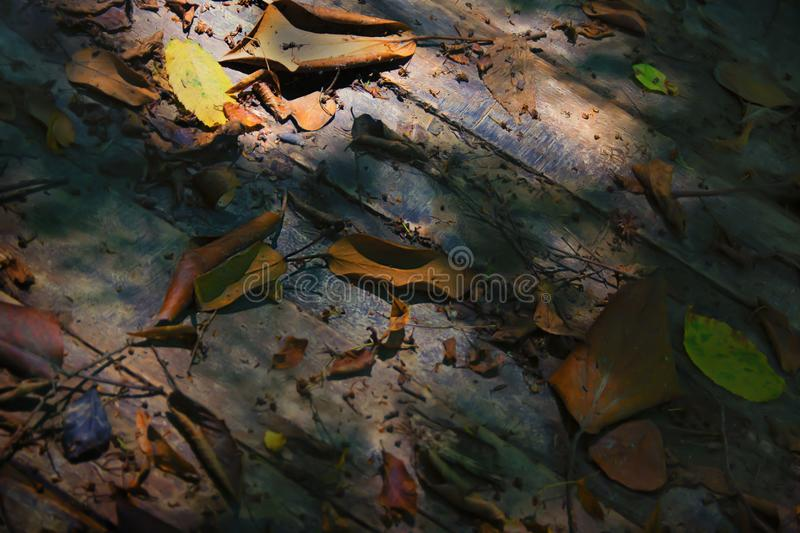 Background made of fallen leaves and wooden floor in the fall. utum. Photo taken in cold key royalty free illustration