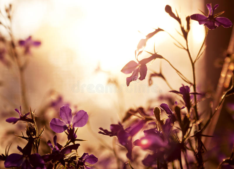 Background made by violet wildflower royalty free stock photography