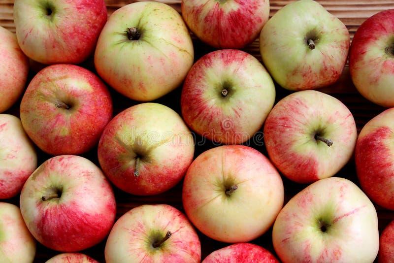 Background many apples large juicy ripe autumn. Apples, many, red, apple, background, nature, organic, food, healthy, fruits, sweet, raw, ripe, fresh, summer royalty free stock photos