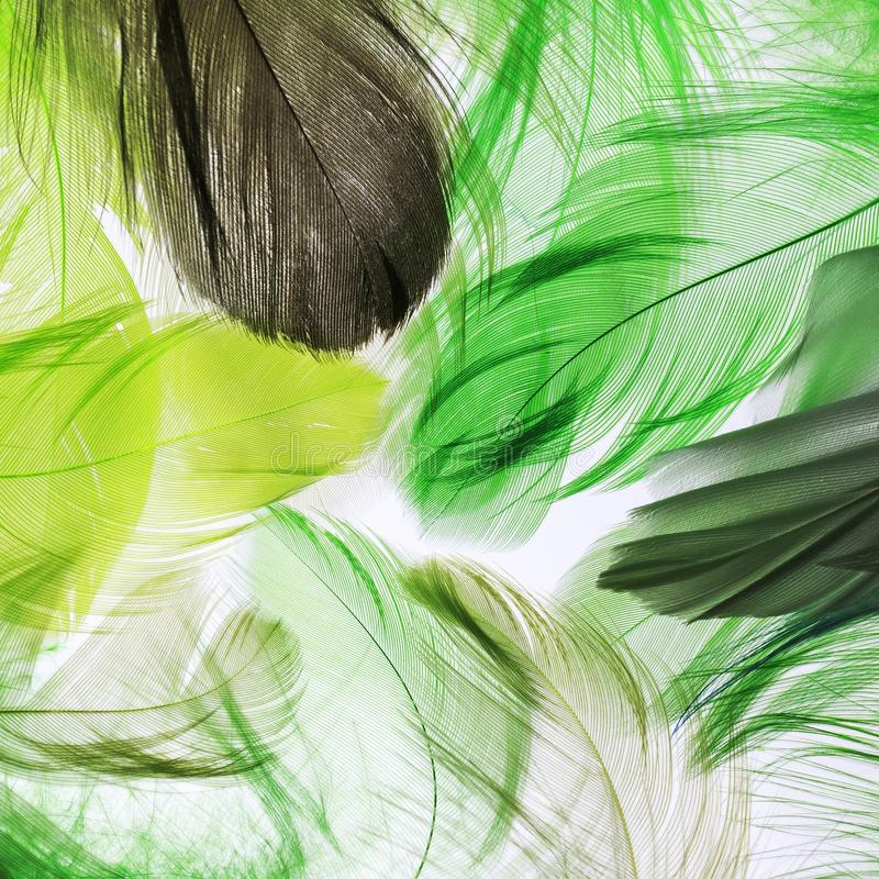 Background of many colorful feathers of a bird and fabulous brig stock images