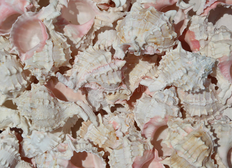 Background of many exotic ocean shells for sale royalty free stock photography
