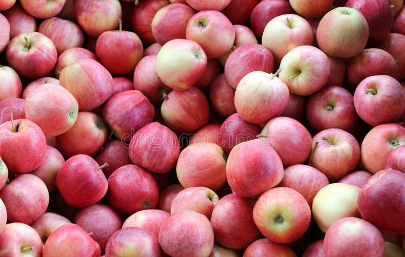 Background of many red apples. For sale stock images