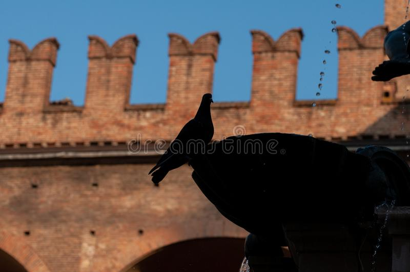 Profile in silhouette of the Fountain of Neptune with pigeon profile in Bologna Italy. stock photo