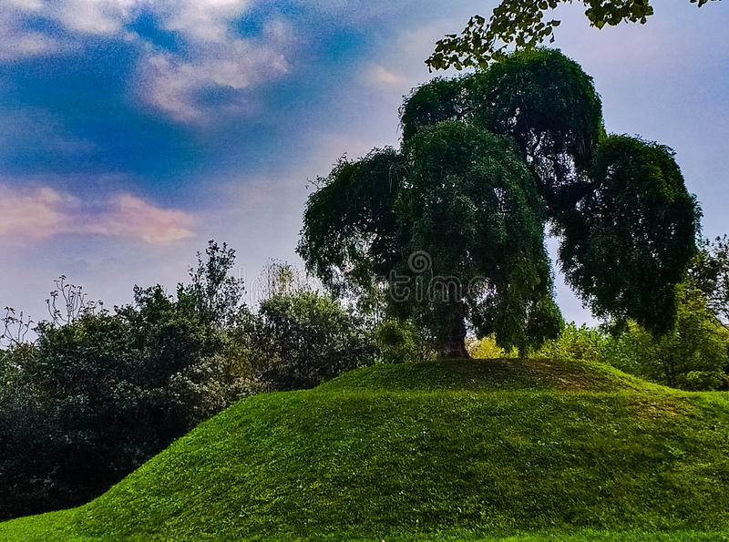 Background, natural landscape that portrays a tree planted on a small artificial hill. stock photography