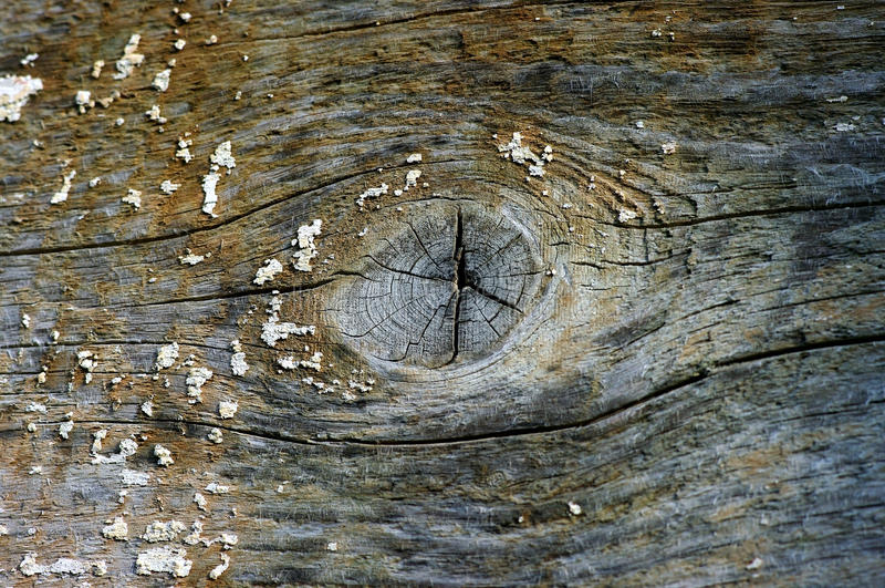 Background with natural timber structure royalty free stock images