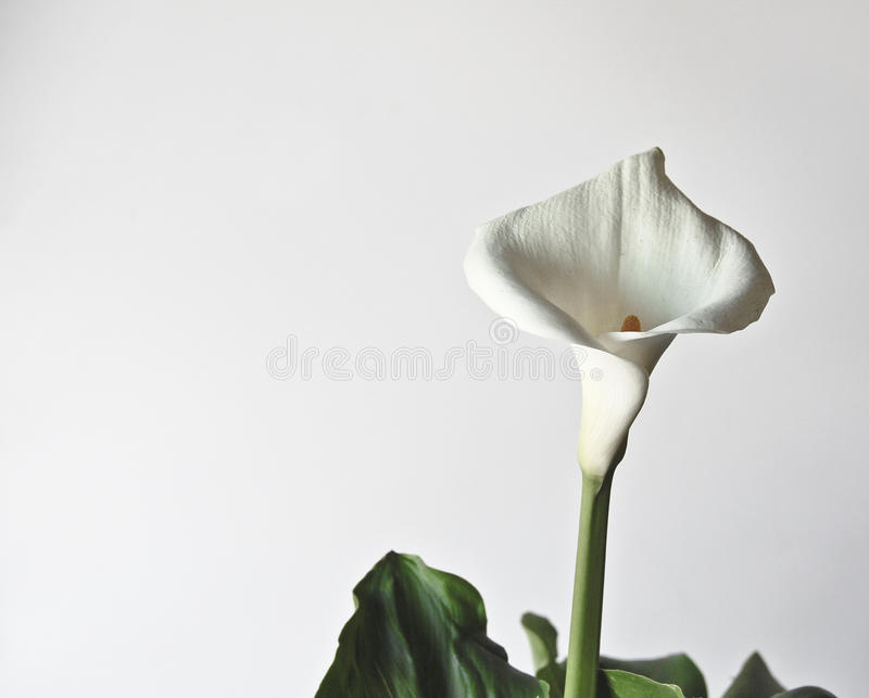 Download Background of nature stock image. Image of lilies, feminine - 13994839