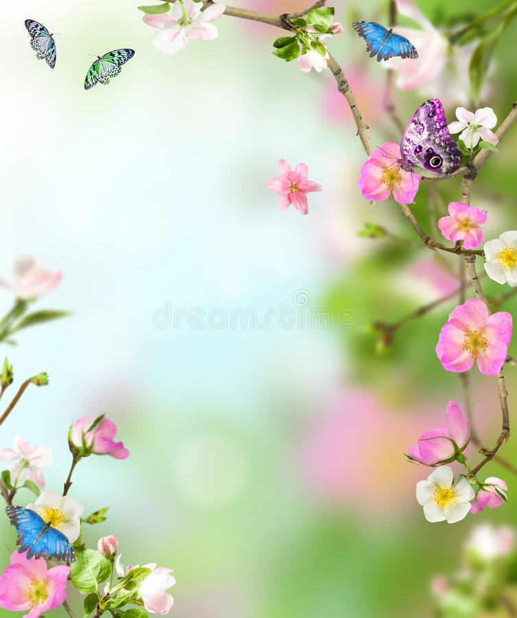 Background nature stock photography