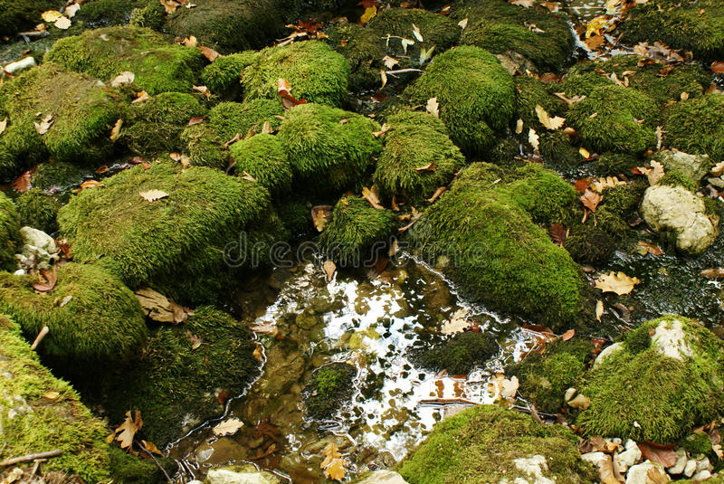 Background nature green moss on the boulders, autumn leaves, and a puddle of water. Abstract nature background with dark green moss on the boulders in the quiet royalty free stock images