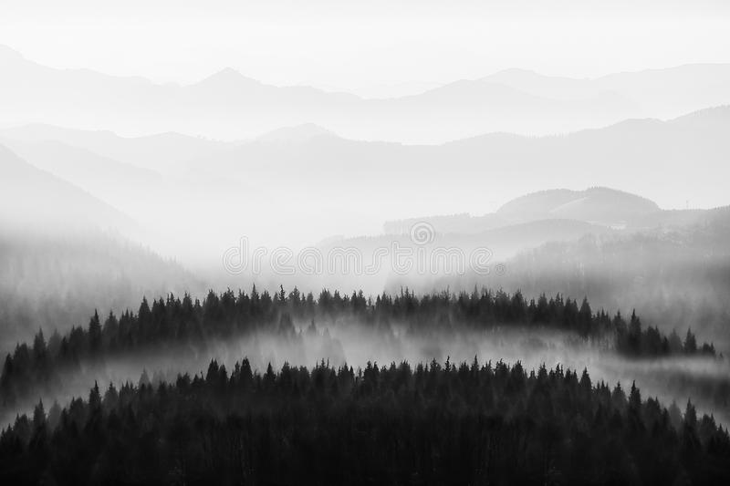 background of nature with trees and mountains silhouette in black and white stock images
