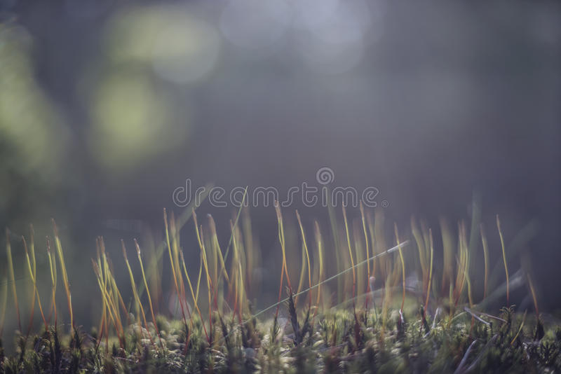 Background with a nature undergrowth in blue tone and light stock photo
