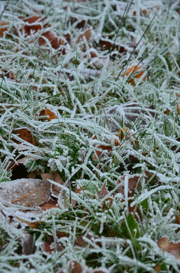 Free Background Of Autumn Leaves In The Frost Stock Photos - 172585883