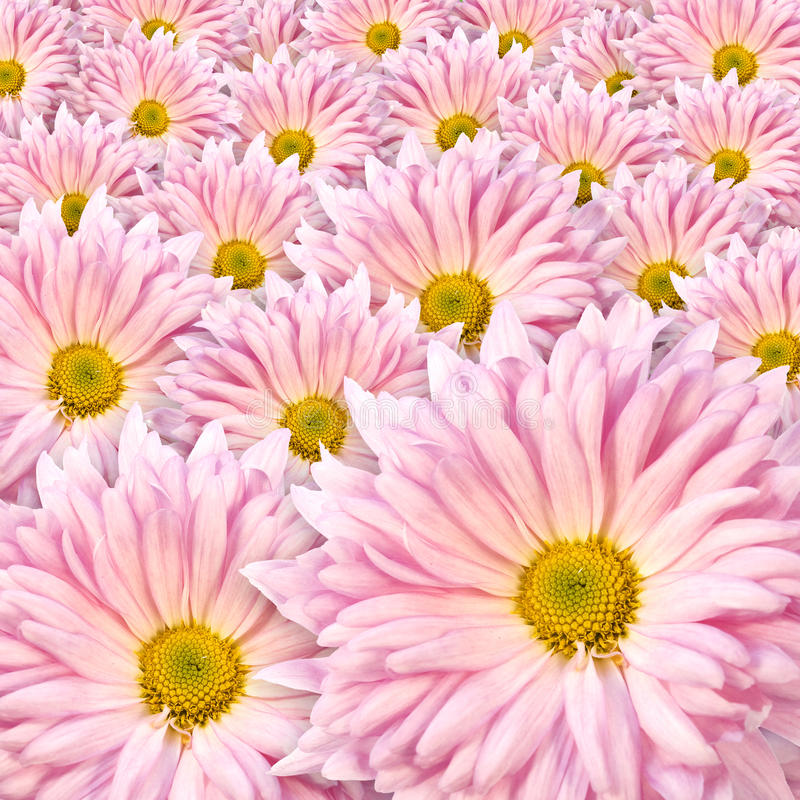 Free Background Of Pink Flowers Stock Photo - 21520110