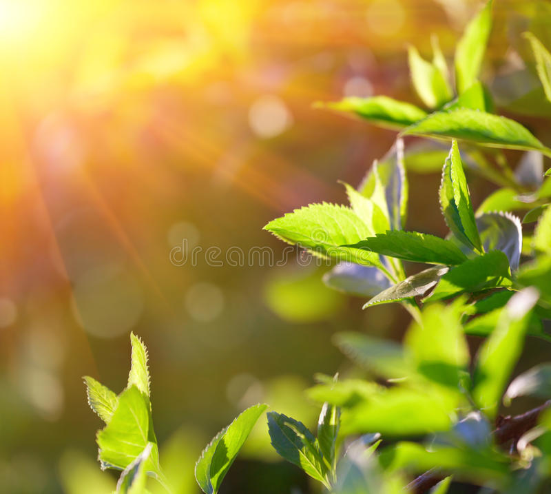Free Background Of Spring Leaves Stock Photos - 21472433