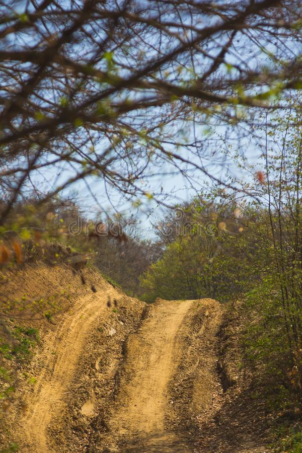 Background with offroad road and trees. In a sunny day ideal to put car or bike in royalty free stock image