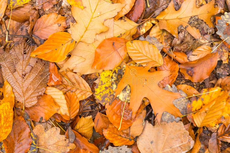 Background of orange and yellow autumnal leaves lying on ground. Autumn concept backdrop stock photos