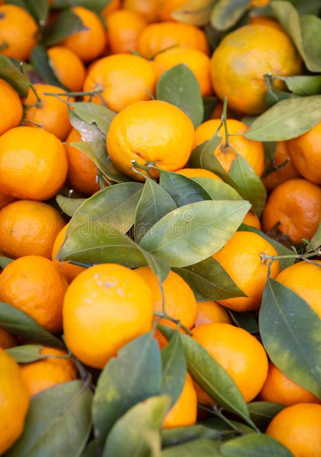 Background of Oranges with Stems royalty free stock photo