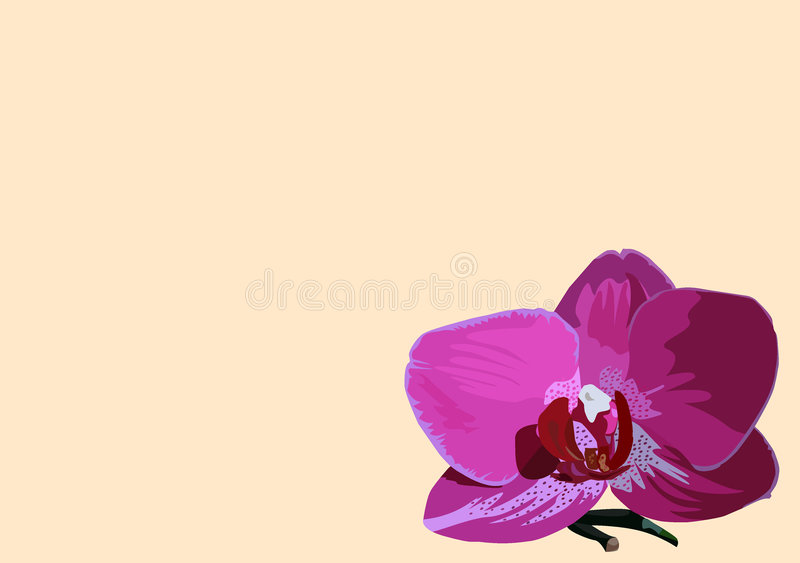 Download Background with orchid stock illustration. Image of flower - 7957589