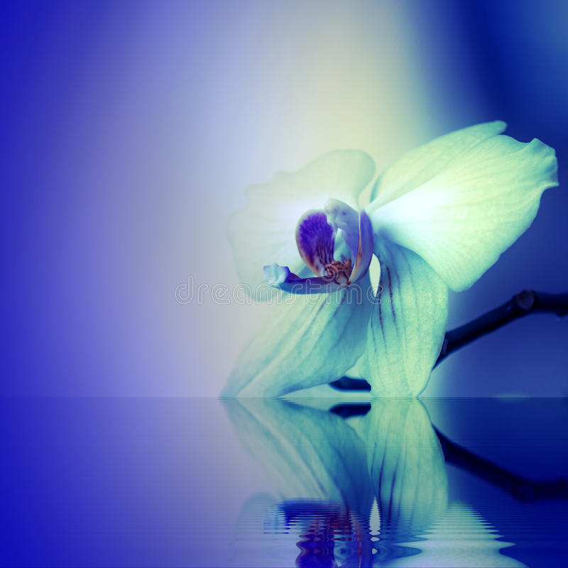 Download Background With Orchid Flowers Stock Photo - Image of background, fresh: 34295342