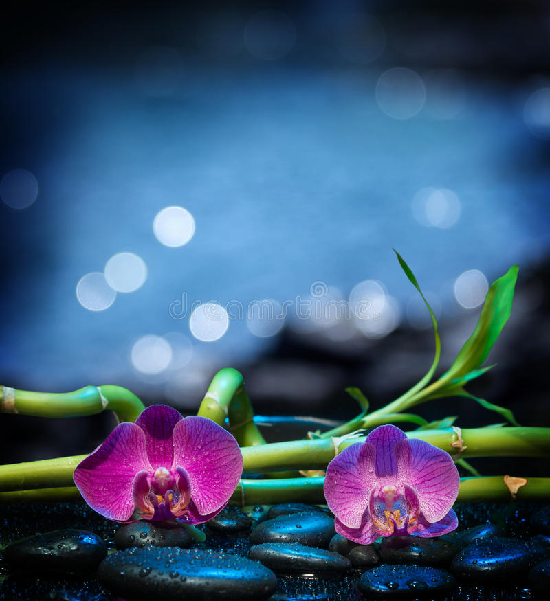 Background with orchids stone and bamboo - sea royalty free stock photos