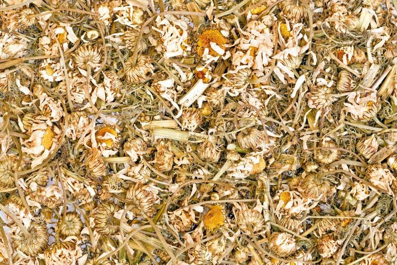 Background of organic chamomile herbal tea. High resolution photo. royalty free stock photo