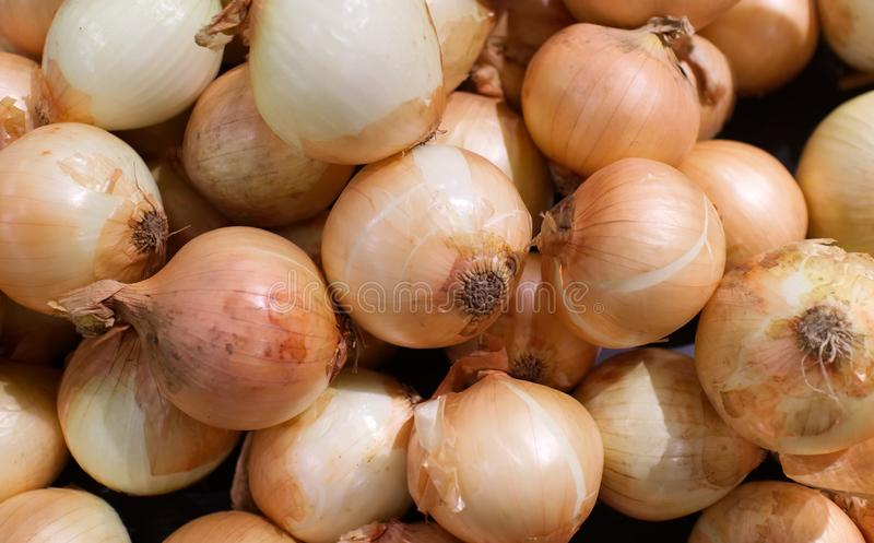 Background of organic onions. use for backdrop or design. Healthy food concept royalty free stock photos