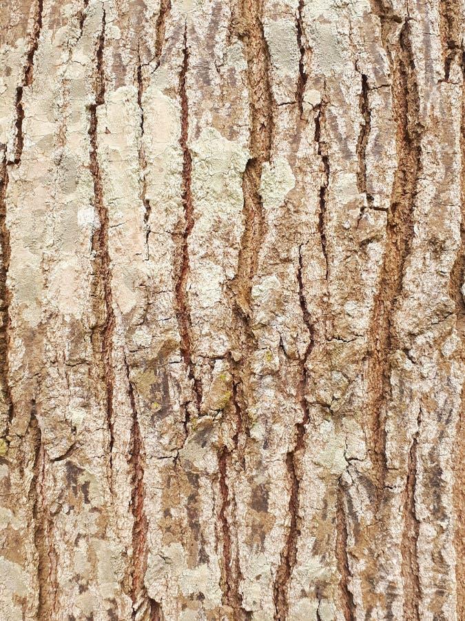 Background. Paintedwood, splat, slat, woodwall royalty free stock images