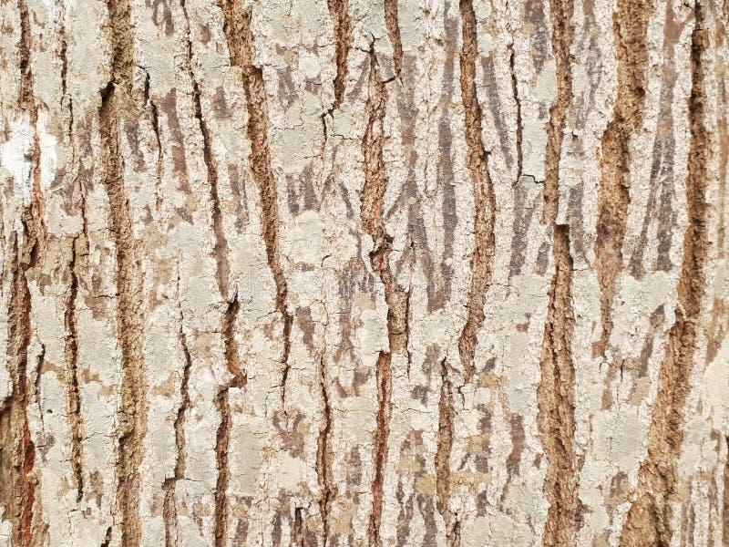 Background. Paintedwood, splat, slat, woodwall stock photos