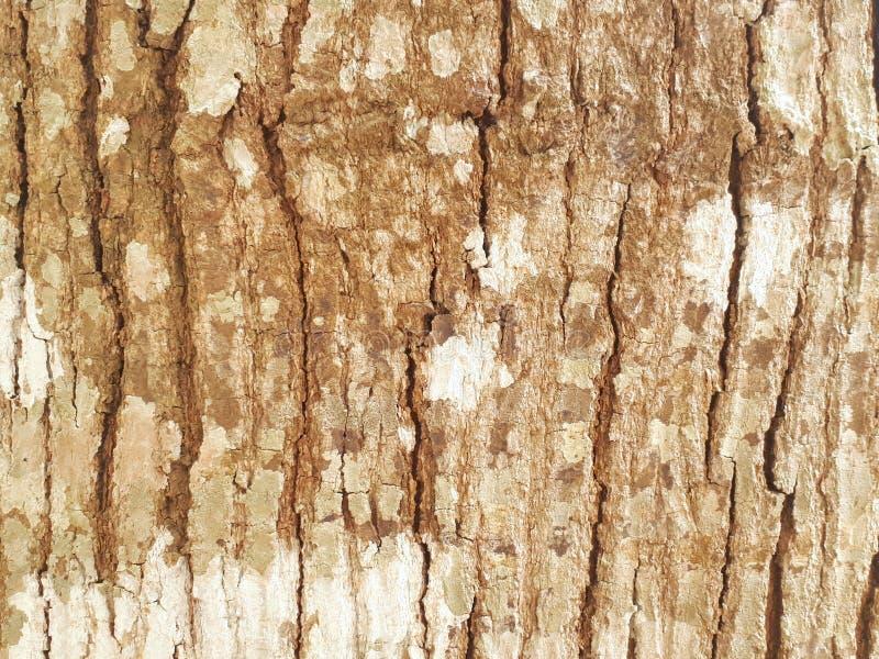Background. Paintedwood, splat, slat, woodwall royalty free stock photography