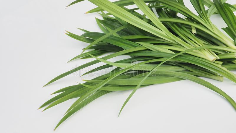 Background Pandan group from my plant isolate on white.  stock photography