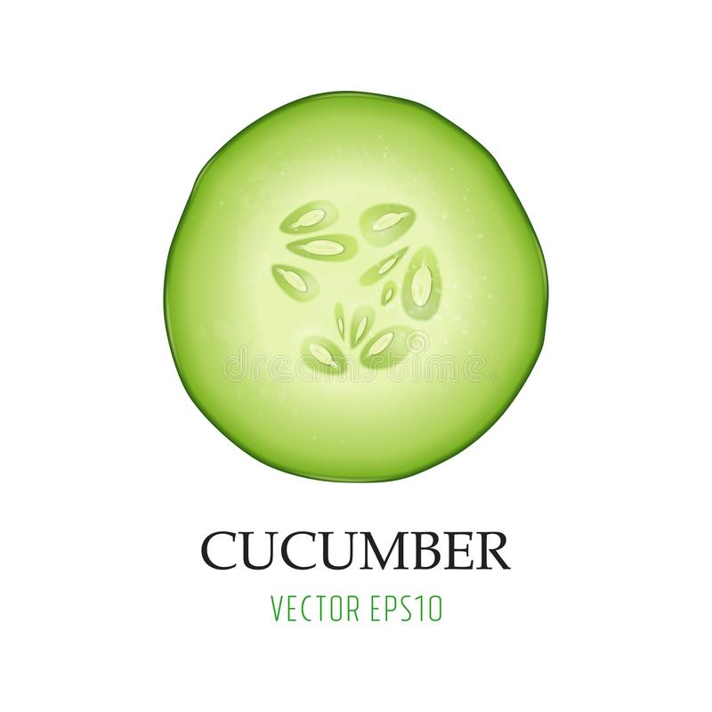 Background with photo-realistic 3d slice juicy cucumber icon closeup isolated on white. Design template for graphics. Food vector illustration stock illustration