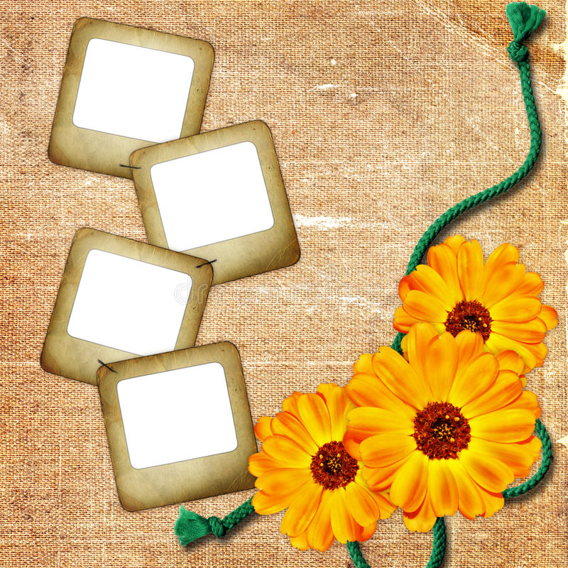 Download Background With Photo Slide, Flowers And Rope Stock Photo - Image: 12245960