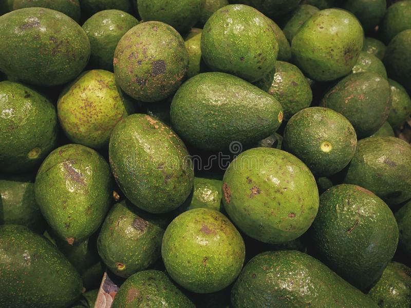 Background of Pile of Fresh Green Avocado Fruits stock photography