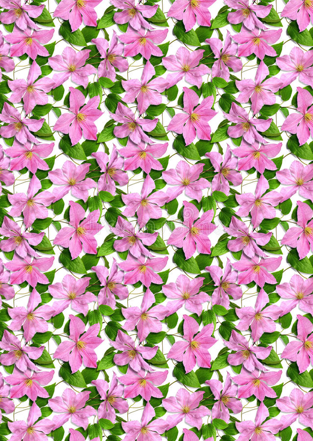 Background_pink_flowers_clematis image libre de droits