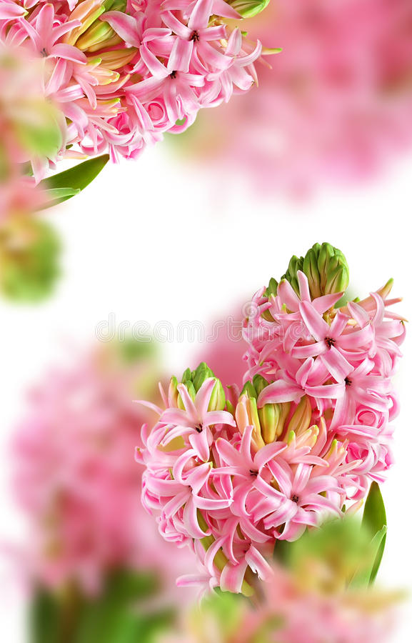 Download Background From Pink Hyacinth Stock Image - Image: 21975655