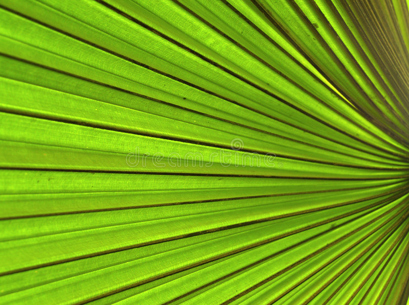 Download Background  plant  01 stock photo. Image of nature, blades - 522272