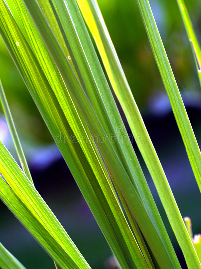 Background plant form 15 royalty free stock photo