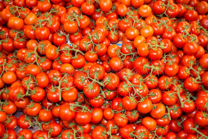 Background of plenty of red branch tomatoes royalty free stock photos
