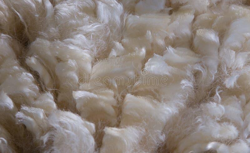 Background of prize winning New Zealand merino wool. 2 royalty free stock photo