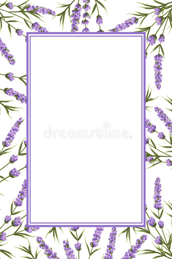 Background of purple lavender flowers, watercolor style flowers. vector illustration