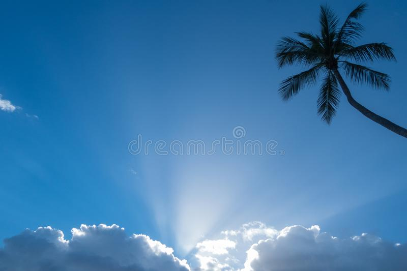 Blue sky with fluffy white clouds, sunbeams and a palm tree silhouette royalty free stock photography