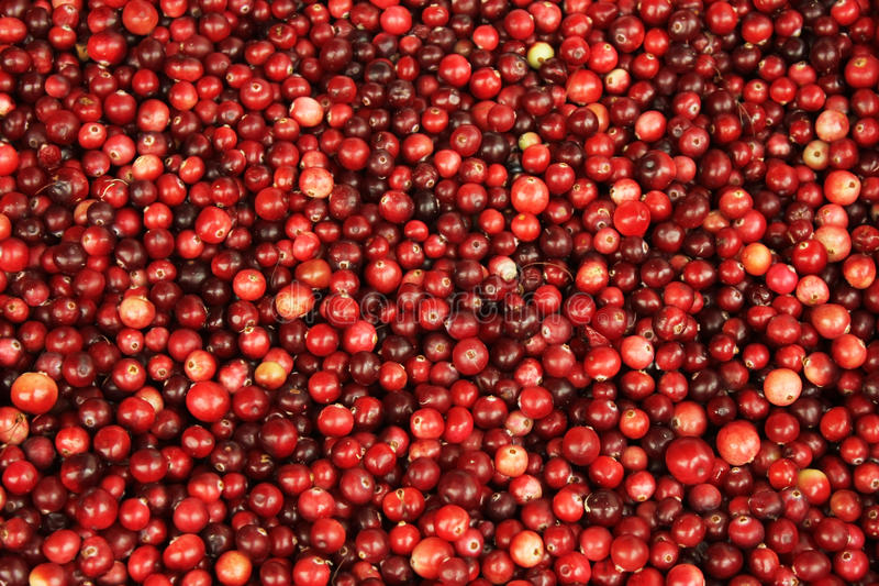 Background of red berries stock photo