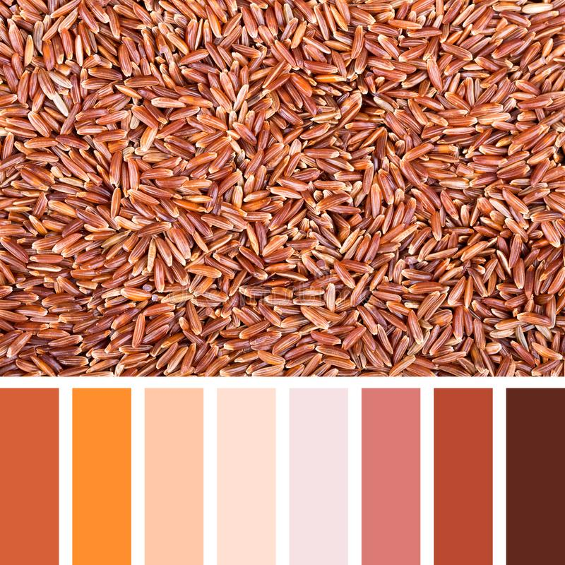 Red rice palette. A background of red Camargue rice In a colour palette with complimentary colour swatches royalty free stock photography